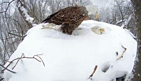 (Photo by Hanover Eagle Watch ejus.tc/1wYUhJ0)