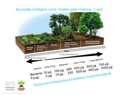 Fig. 4 – Evolução do coberto vegetal em função da carga microbiológica do solo.