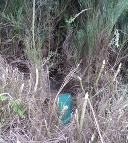 Fig. 2 – Pormenor das plantações nas serras de S. António, 2016 (Foto: José Marques)