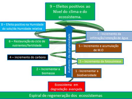 Fig. 3 – Representação de espiral de regeneração dos ecossistemas