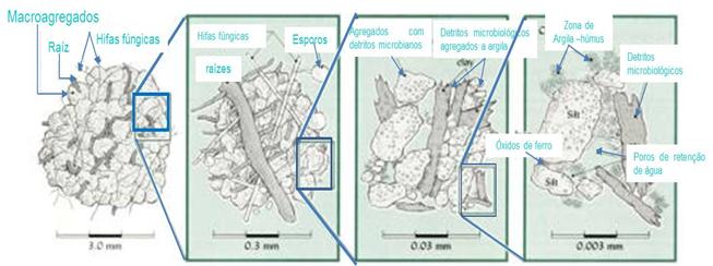 Fig. 3 - Agregados de maior tamanho são normalmente compostos de aglomerações de agregados de menor tamanho. A ilustração mostra quatro níveis hierárquicos de agregação no solo. São indicados diferentes fatores responsáveis pela agregação em cada nível.