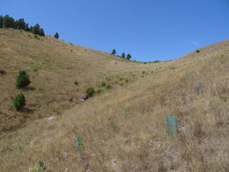 Fig 1- Zona seca com cobertura de gramíneas perenes em processo de senescência (Foto: José Marques)