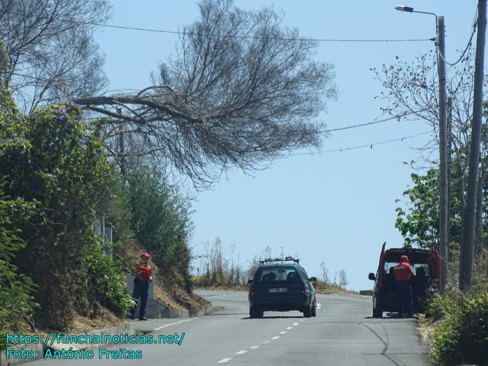 Dangerous tree overhanging road