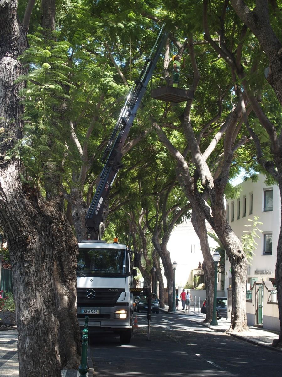 CMF reagiu de imediato e já foi cortar o galho frente à Escola Francisco Franco