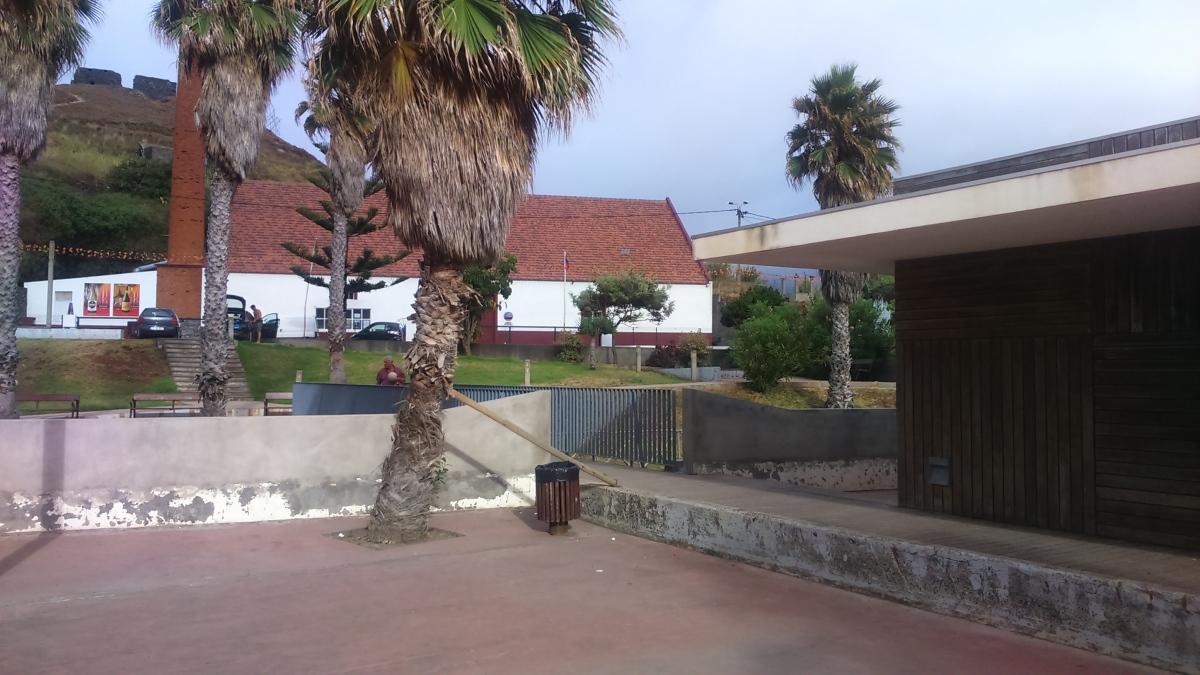 Palmeira no Porto da Cruz segura por um barrote