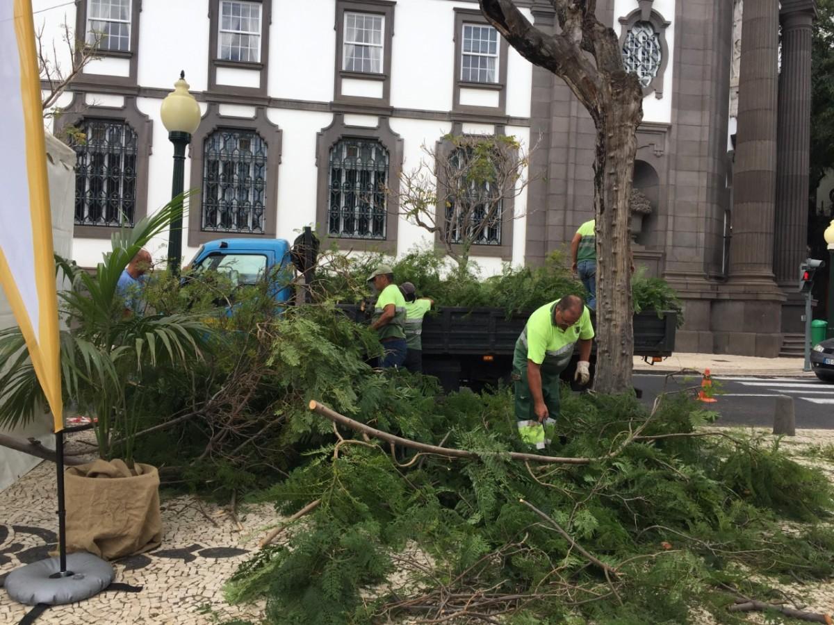 """""""Obsessão"""" pelo corte de árvores chega agora à Avenida Arriaga"""