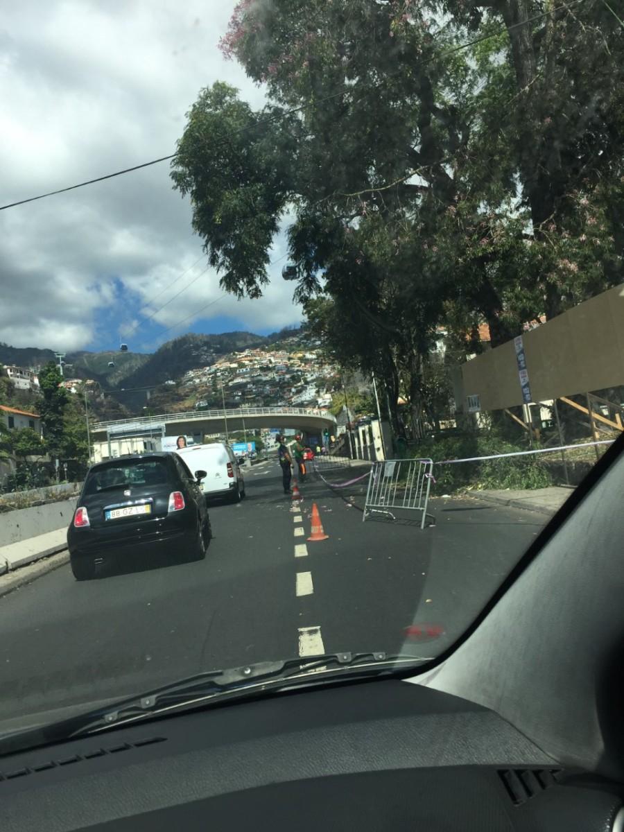 Maratona do corte à árvore prossegue em toda a cidade após a morte de 13 pessoas no Monte