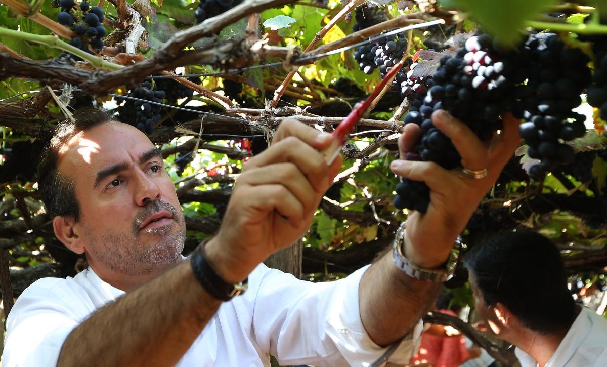 Câmara de Lobos dá 13 cêntimos a viticultores que não consigam escoar produção