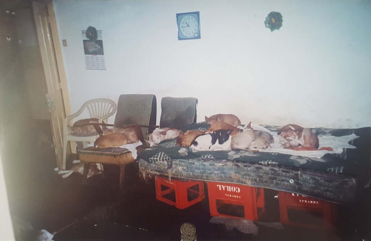 Câmara de Lobos mostra em que condições viviam os 50 cães resgatados