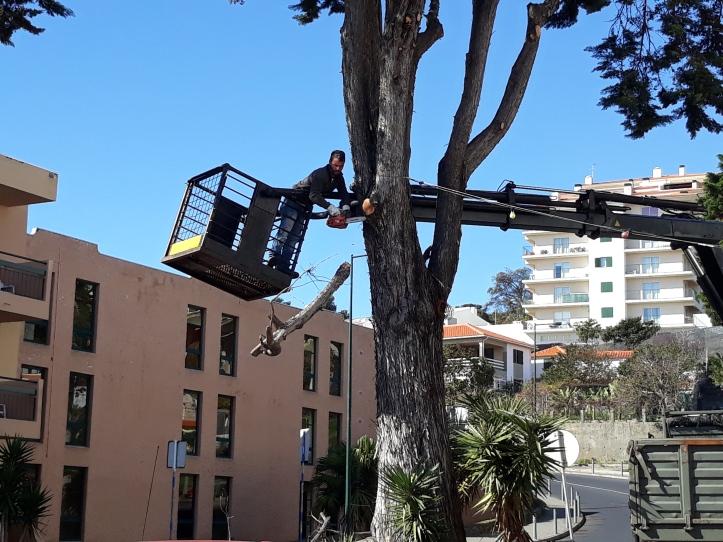 Árvore desbaste B