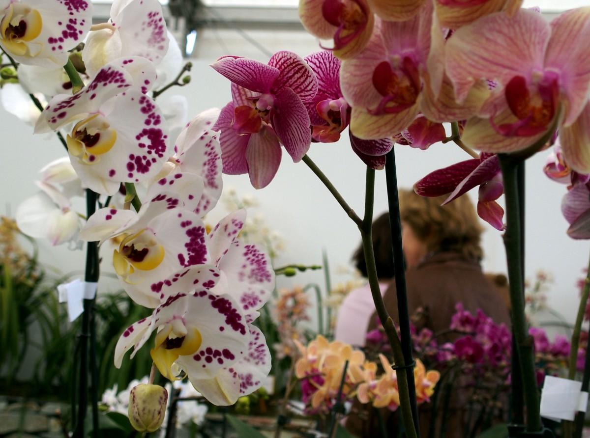 """Veja as imagens da """"Festa"""" que se faz com a Flor"""